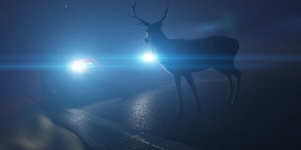 deer car accidents in texas roads what to do after and before